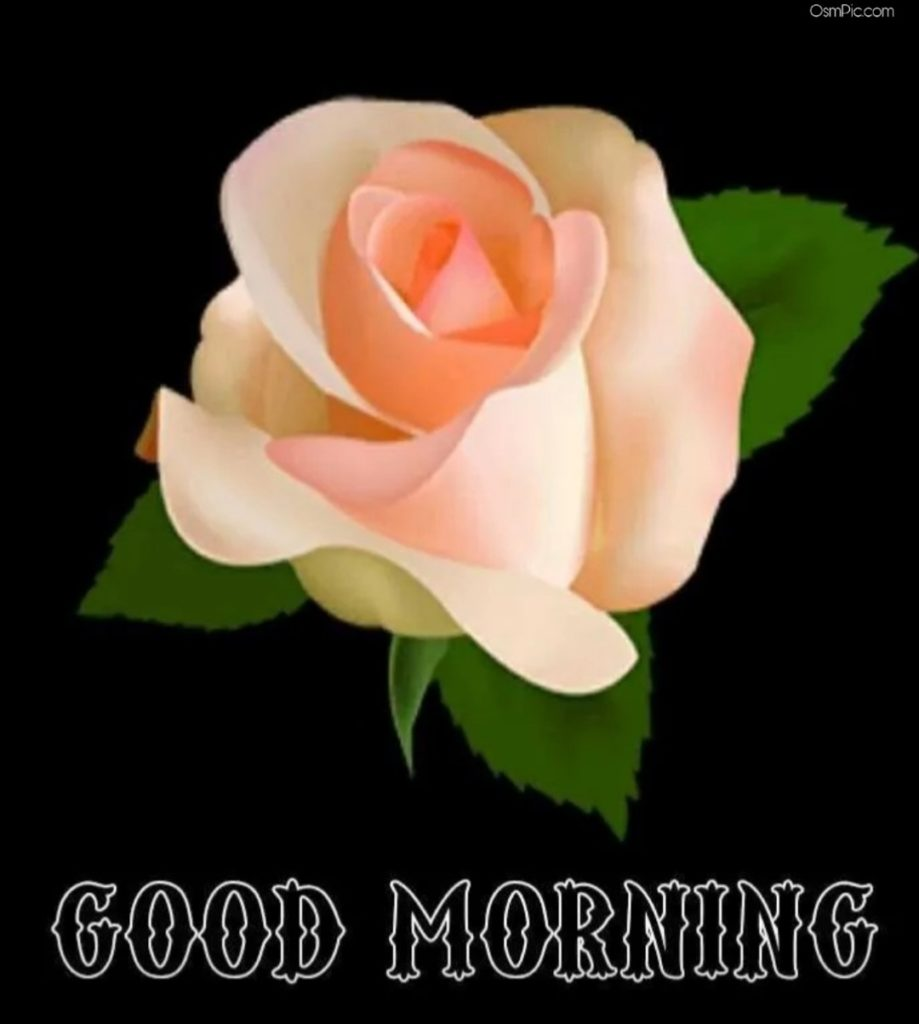 Good Morning Yellow Rose For Friendship With Quotes Of good Morning