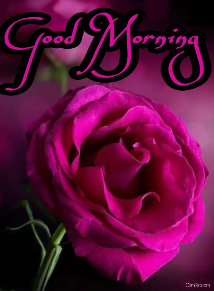 Amazing Good Morning Images With rose flowers
