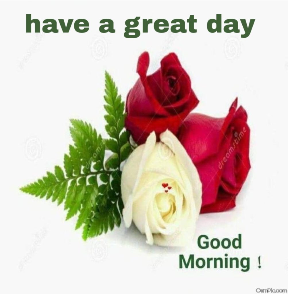 Have g great day good morning rose Picture for Whatsapp