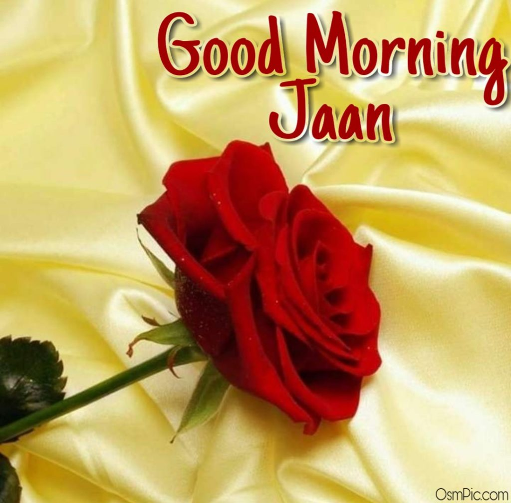 good morning jaan rose image  for love