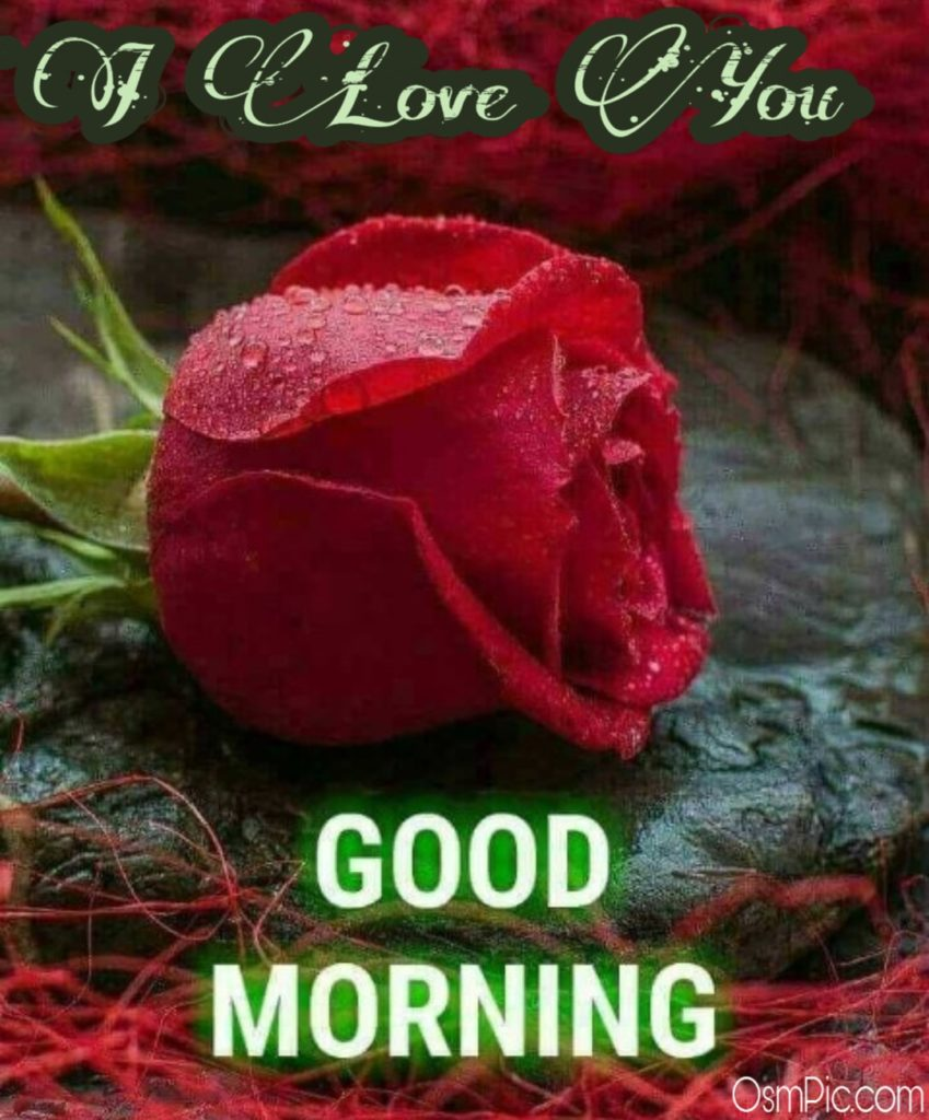 55 Good Morning Rose Flowers Images Pictures With Romantic, Red Roses