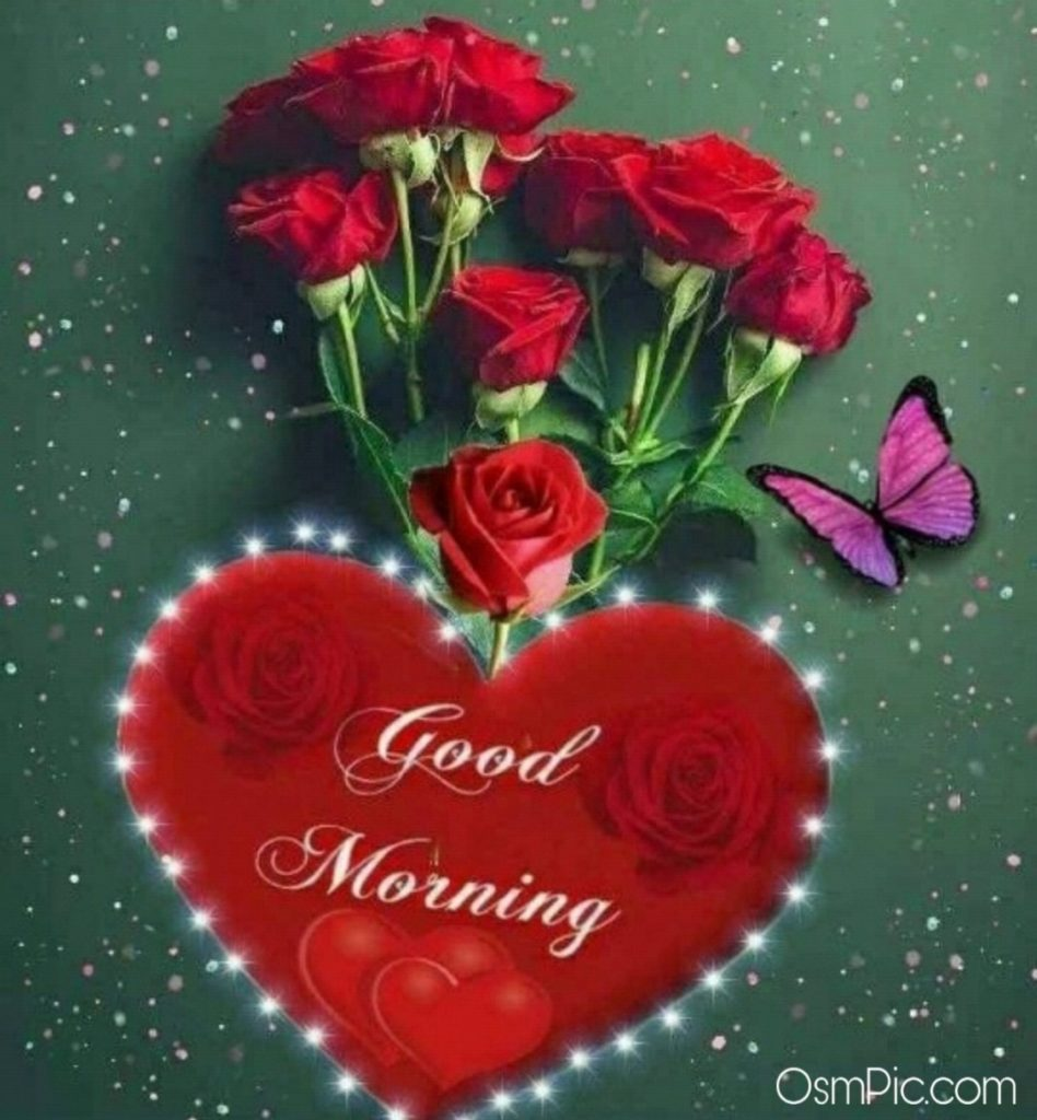 Red rose images love hd good morning