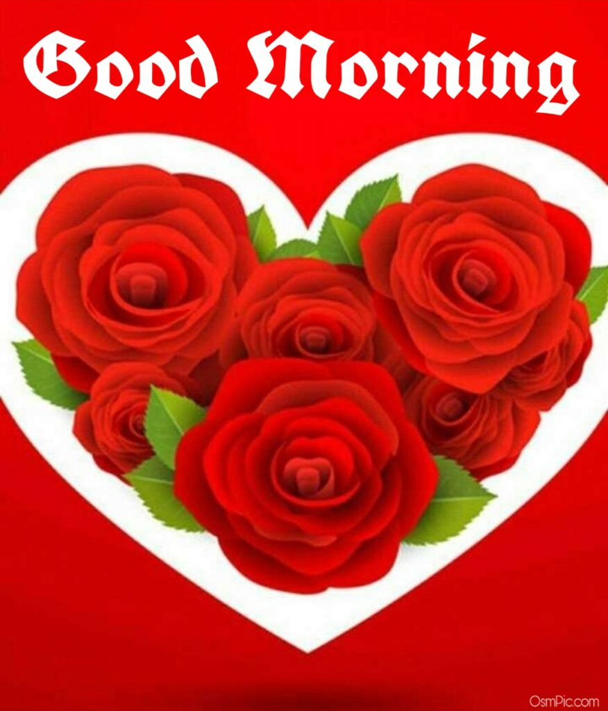 101 love good morning images with love Roses and Wallpapers