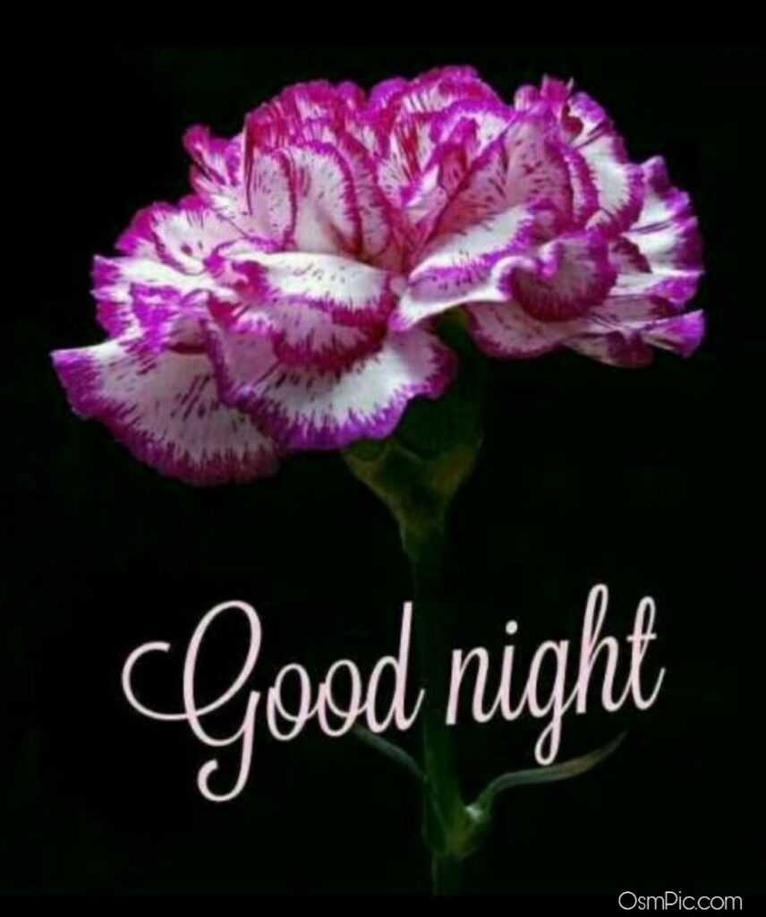 Good Night Flowers Images Pictures Photos Wallpapers