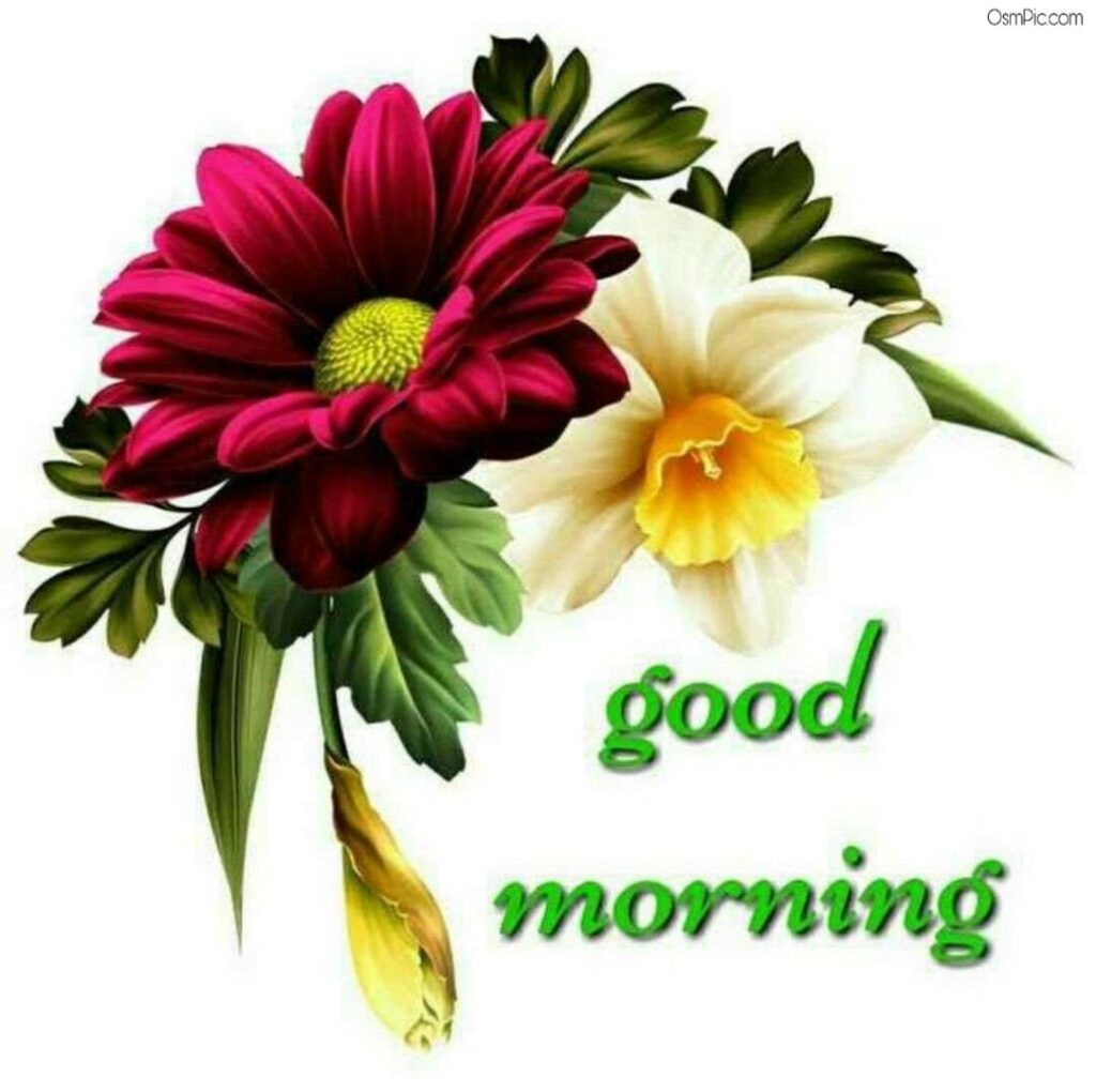 Good morning flowers Wallpaper Download
