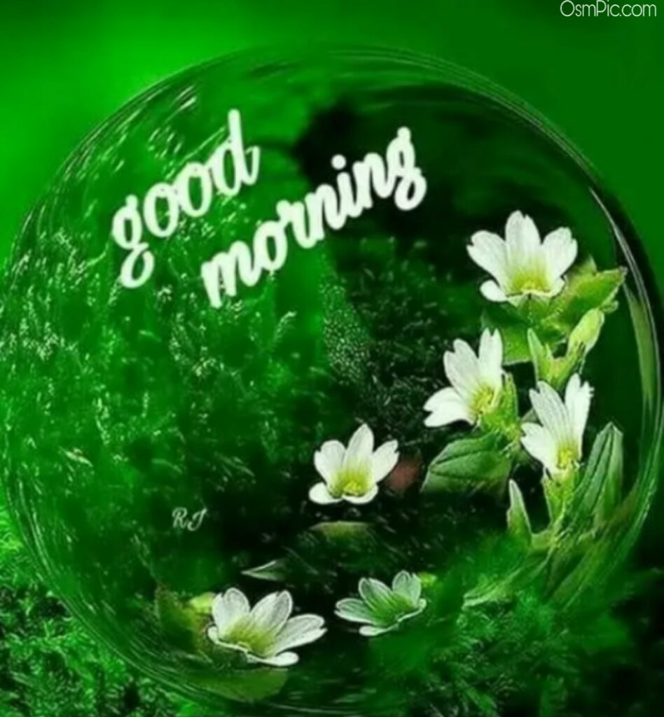 Beautiful good morning flowers images Pictures Photos hd Wallpaper Free Downl