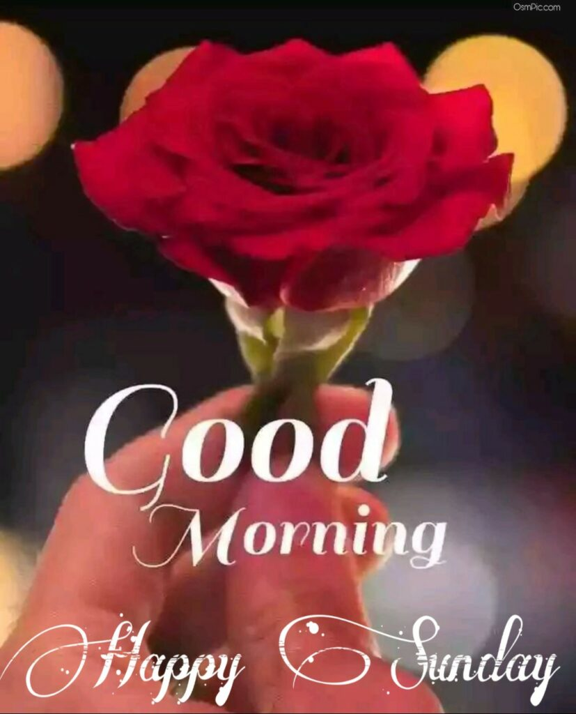 Osm pic good morning happy sunday flowers images