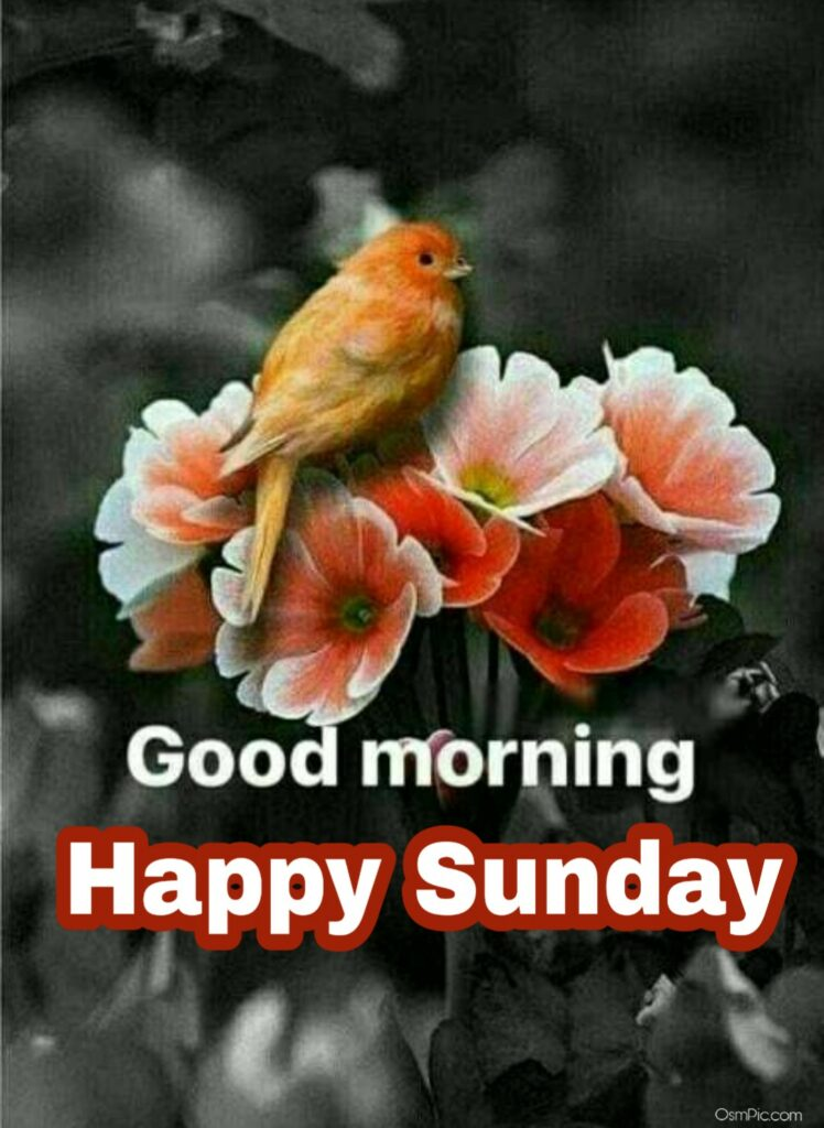 Download good morning sunday birds wallpaper image graphic