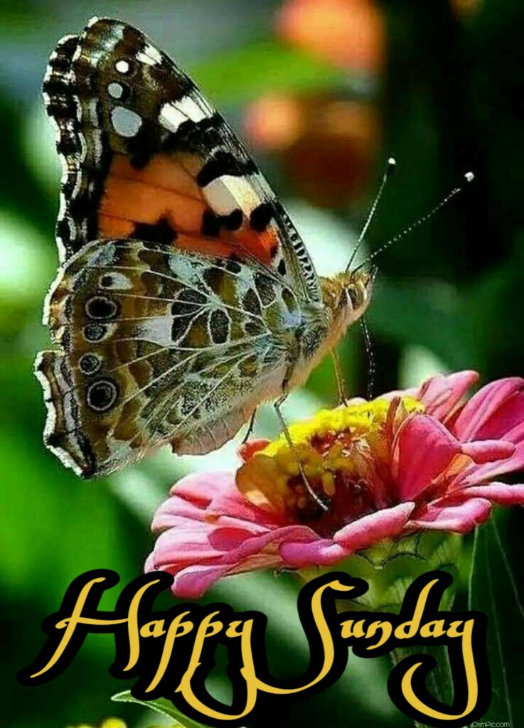 Beautiful Happy Sunday Good Morning Wallpaper  photo with butterfly