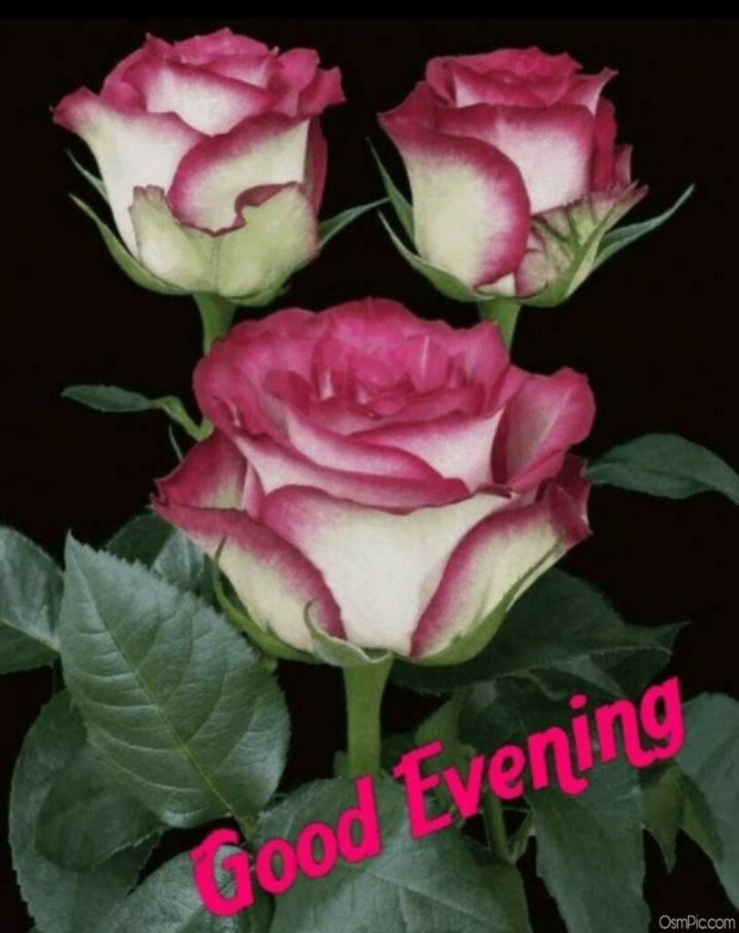 Beautiful good evening image with flowers