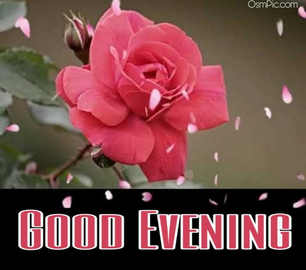 Get best good evening images for Whatsapp from osm pic