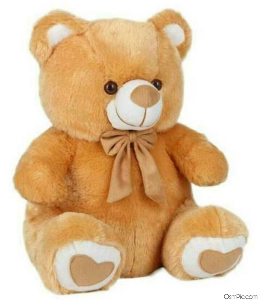 Beautiful and big teddy Bear images for Whatsapp dp images Download