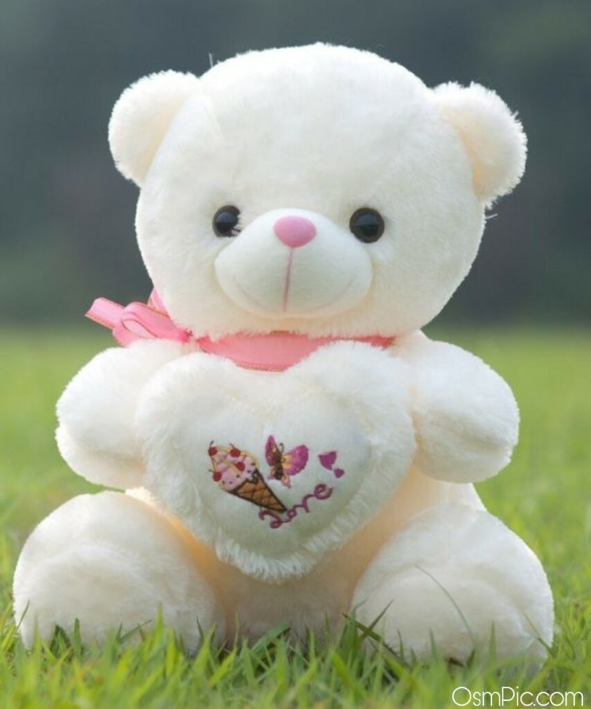 Beautiful big teddy Bear images for Whatsapp dp