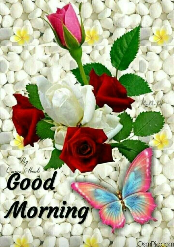 Lovely Good Morning Flowers Image Download