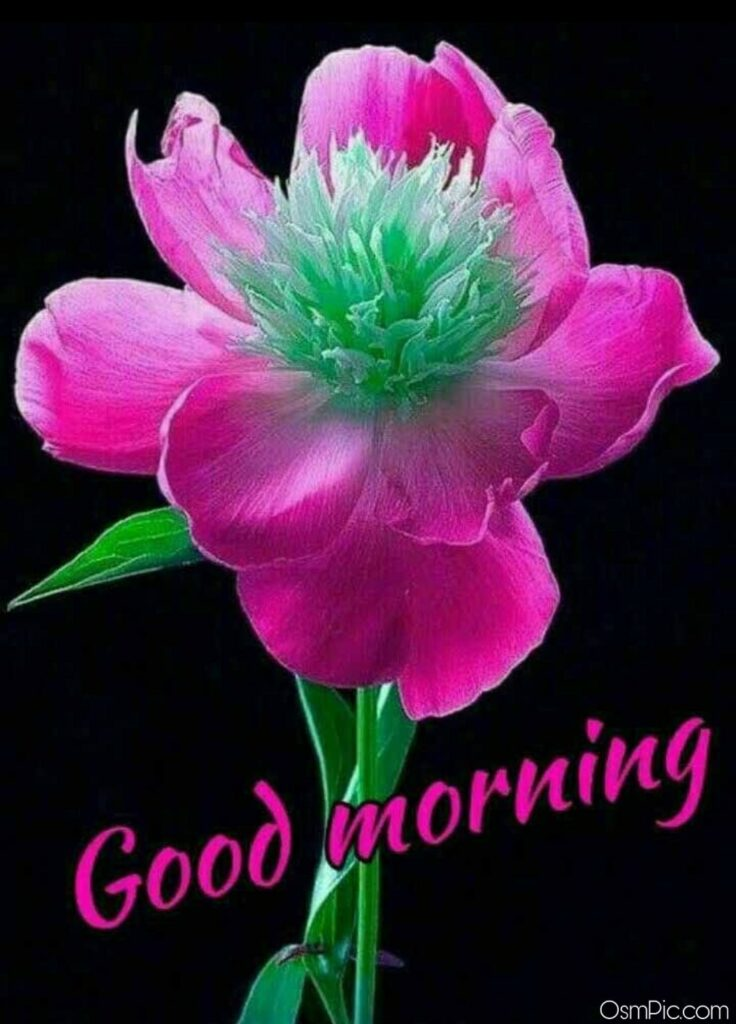 Best Good Morning Images With Flowers Hd Wallpapers Free Download