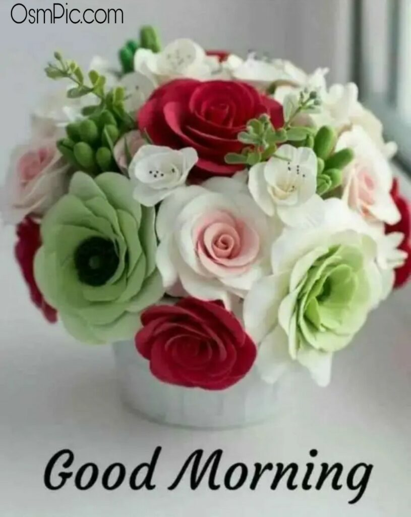 Gm flowers Pictures
