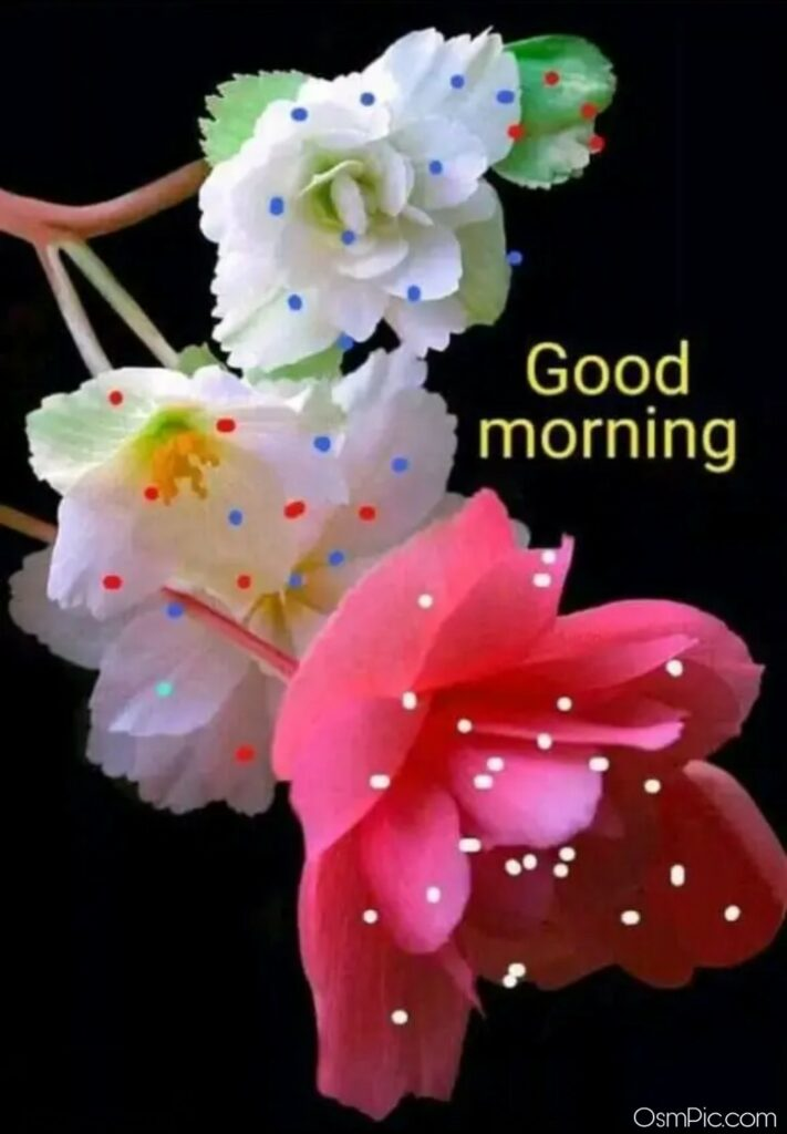 Beautiful Good Morning Flowers Images Pictures HD Photos Free Download