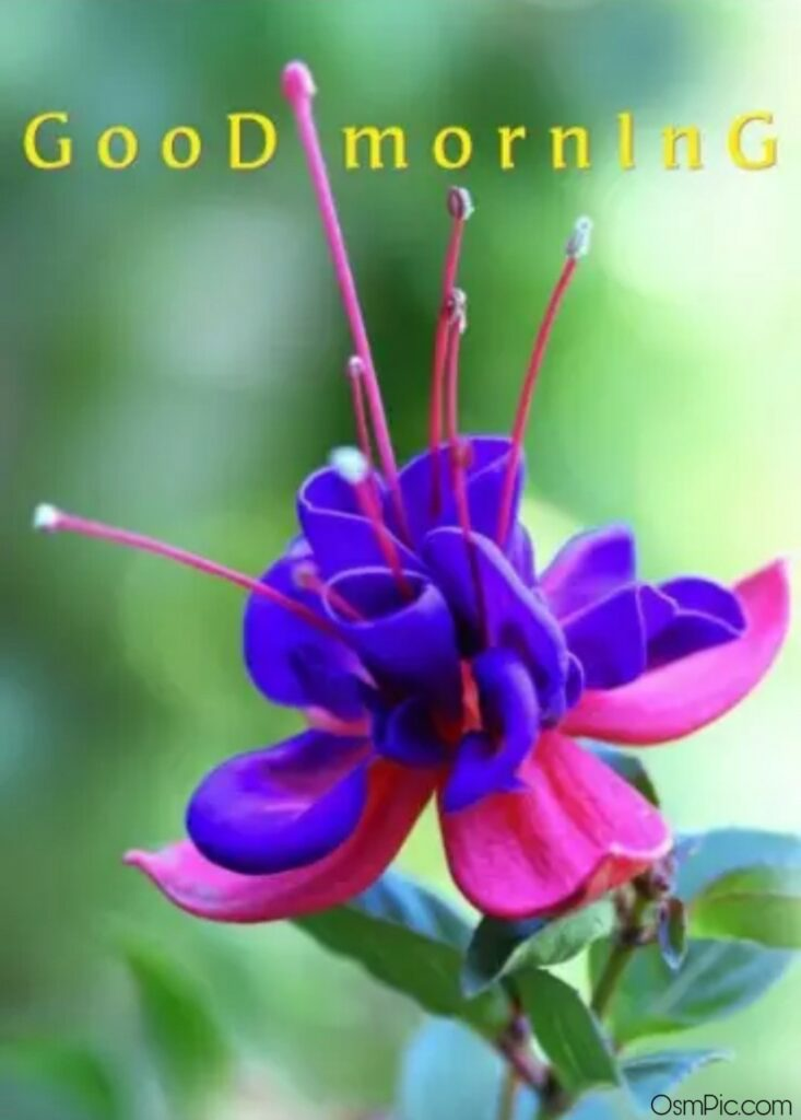 Top 50 Good Morning Flowers Images Pictures HD Photos Free Download