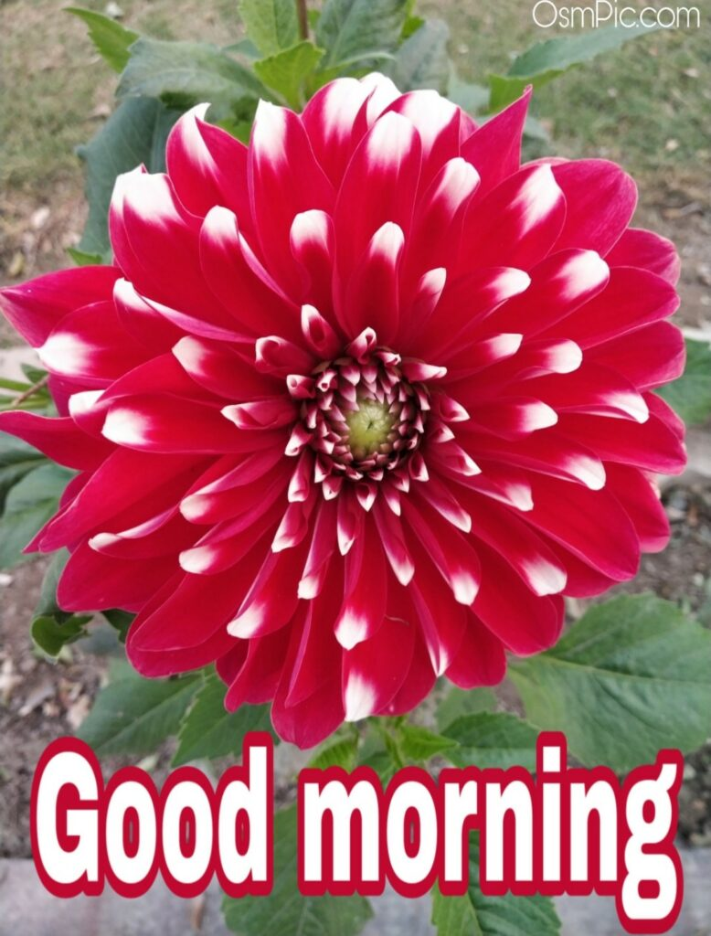 Osm Pic Of Good Morning Flowers
