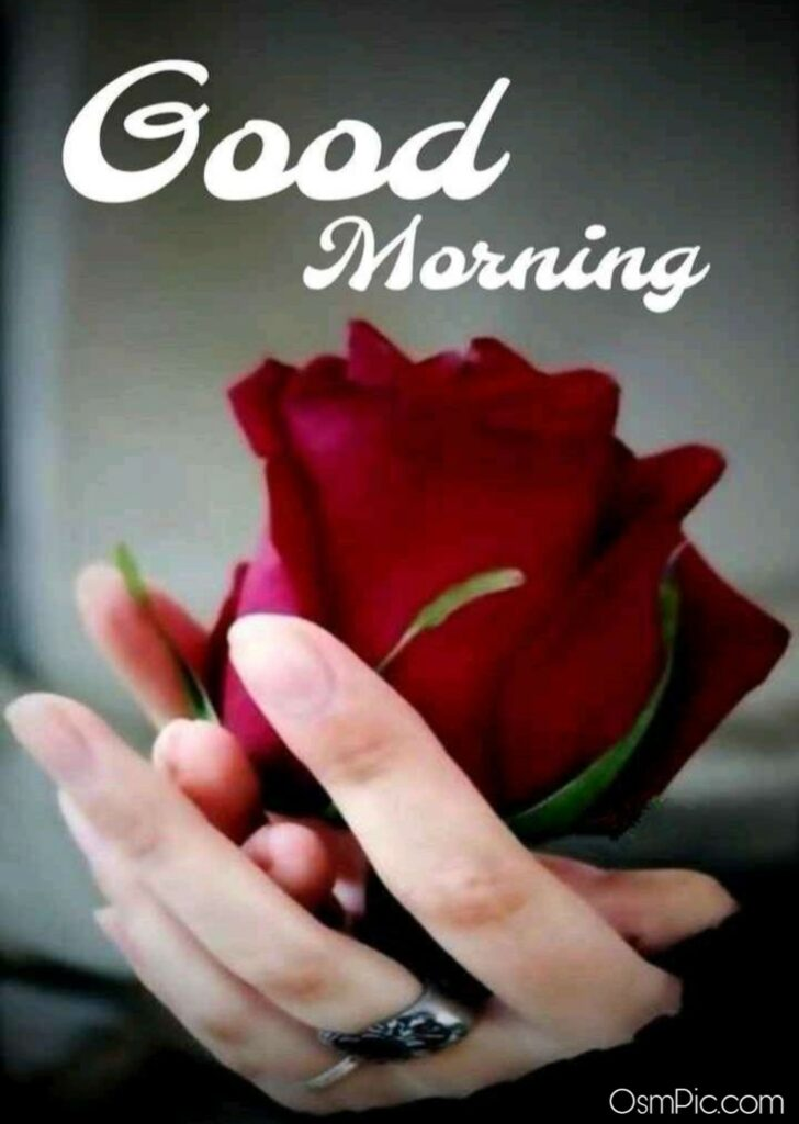 Special Good Morning Rose Flowers Picture For Lovers