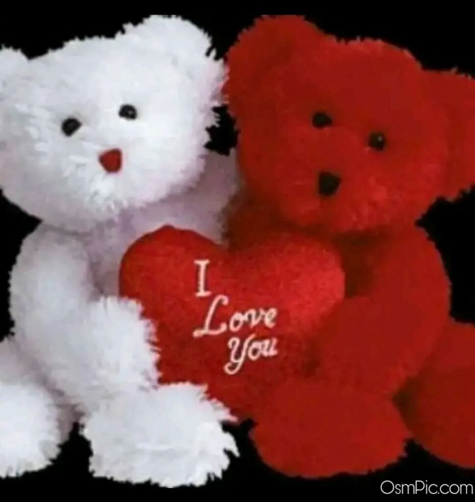 I love you teddy bear couple WhatsApp dp