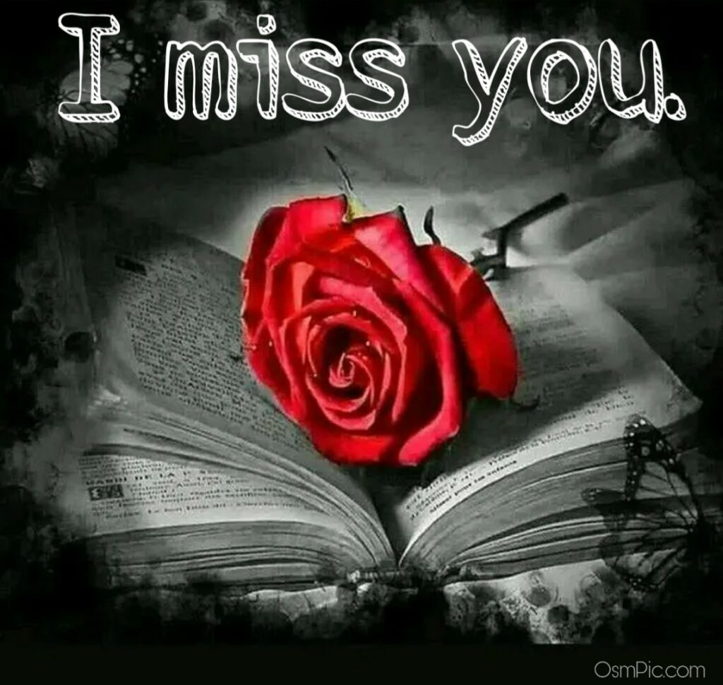 I miss you image for Whatsapp with rose