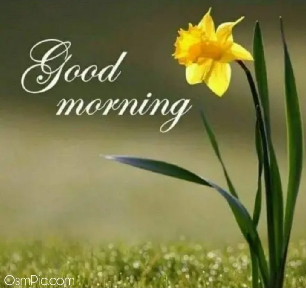 Beautiful good morning images of flowers.