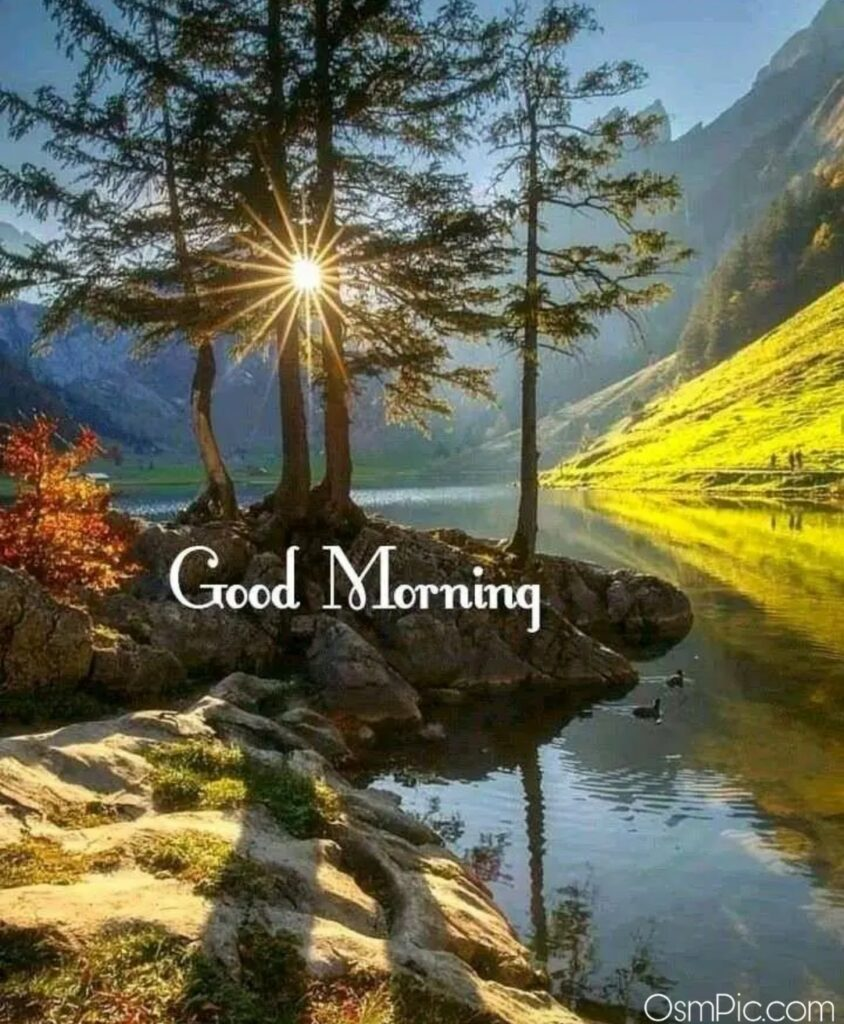Good Morning nature's pic