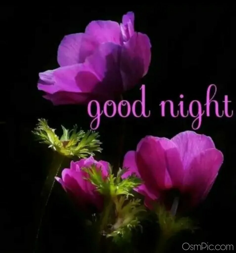 Best Good Night Wallpaper Download Good Night Images Pictures For Whatsapp