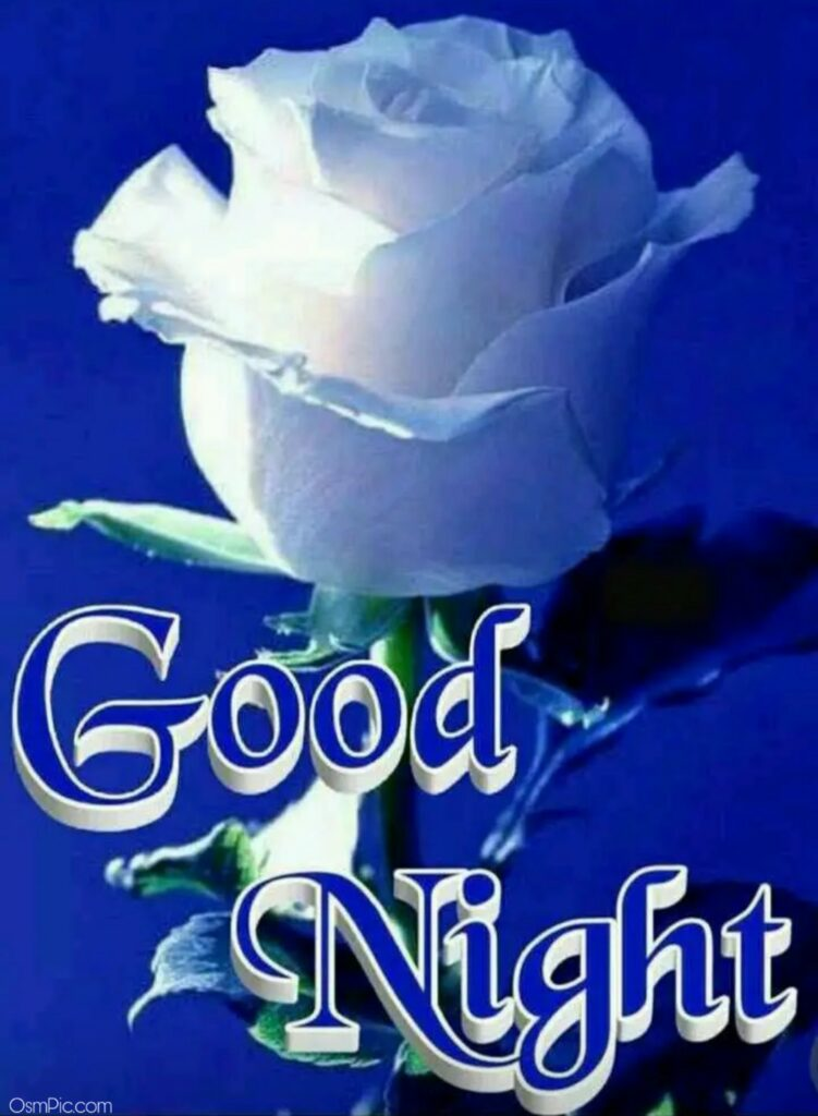 Latest Good Night Rose Pic For Whatsapp Dp