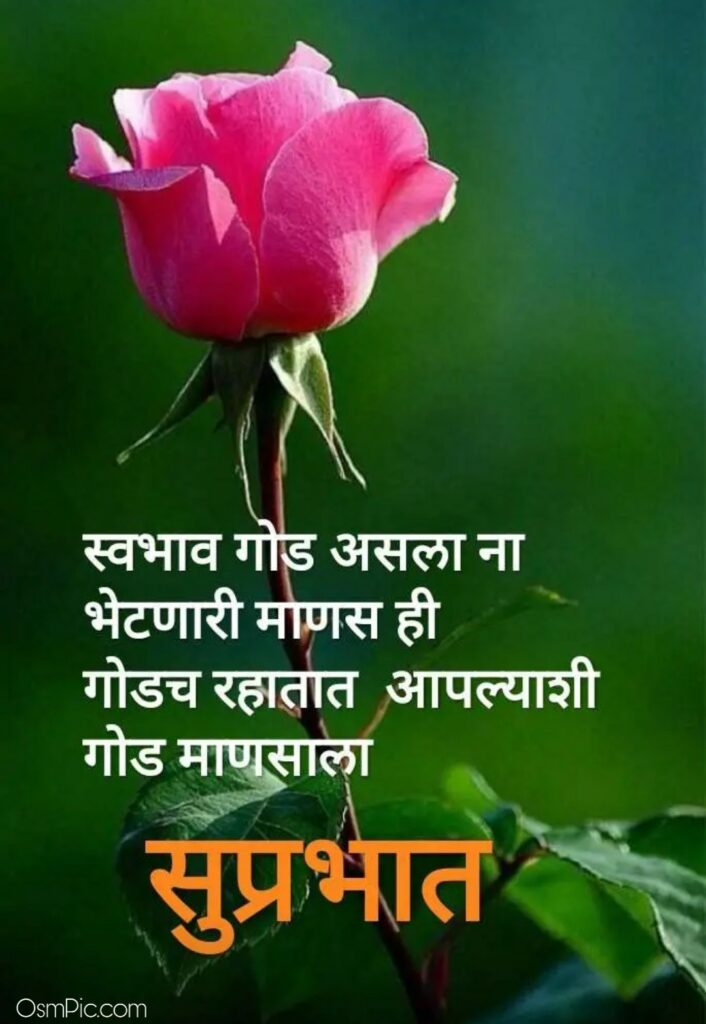 Beautiful Good Morning Image In Marathi With Rose Flower