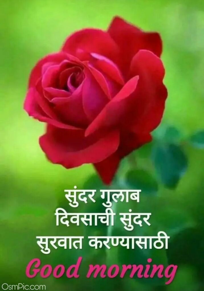 Good Morning Marathi Image with Rose