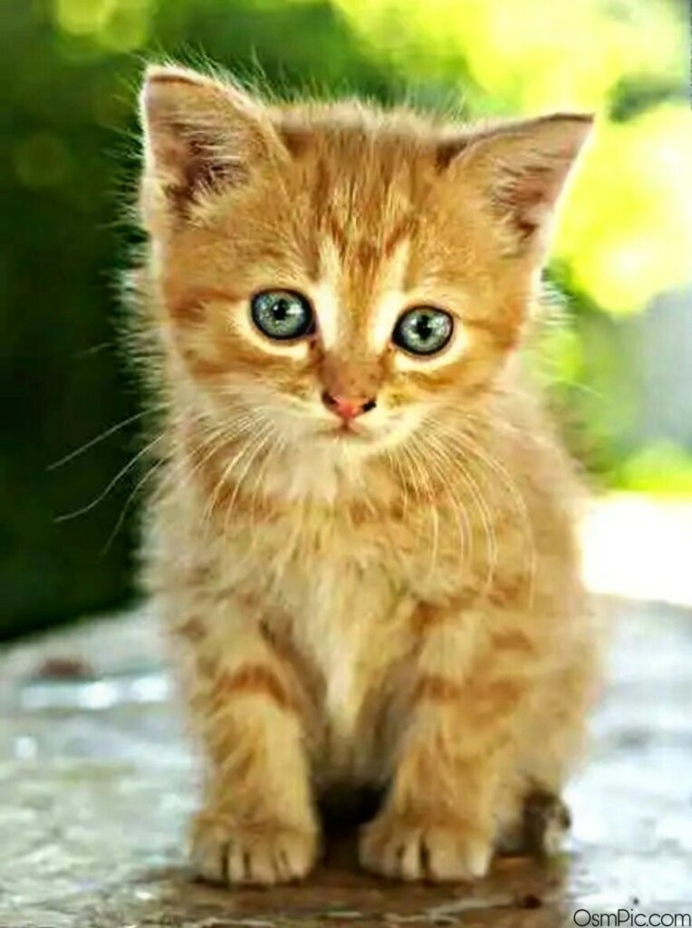 cute cat images for whatsapp dp hd