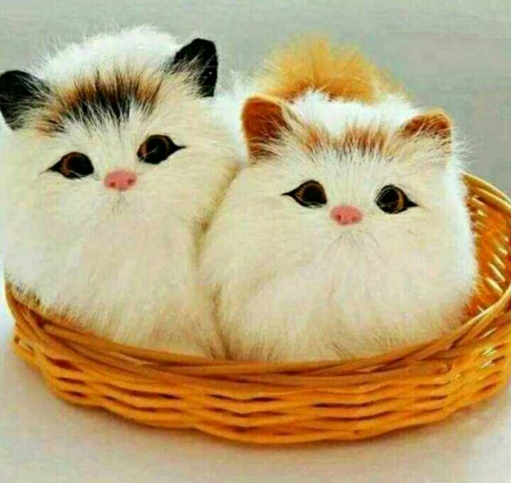 20 Hd Beautiful Cute Cat Images Pictures Wallpapers For Whatsapp Dp