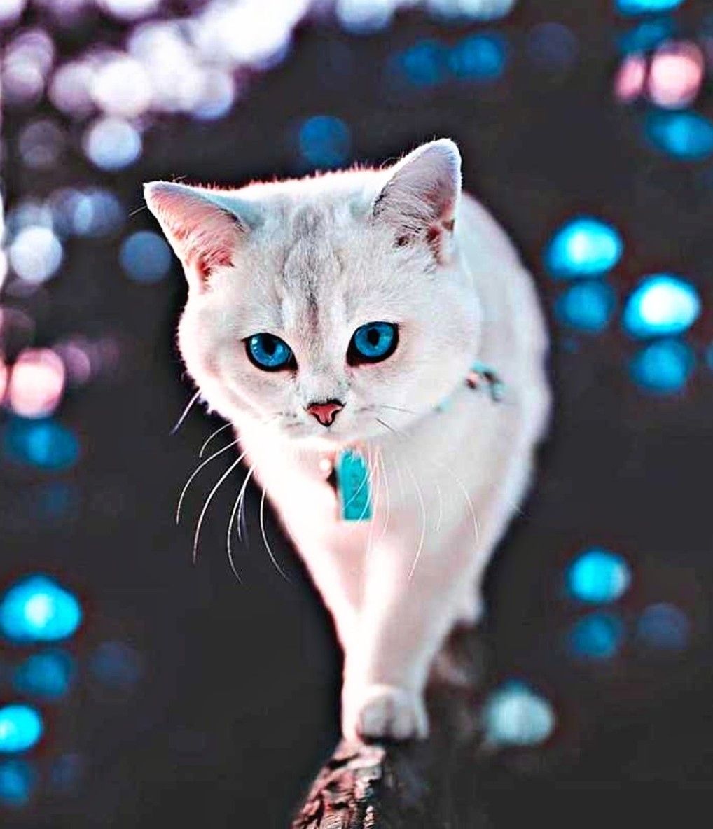 20 HD Beautiful & Cute Cat Images Pictures Wallpapers For ...
