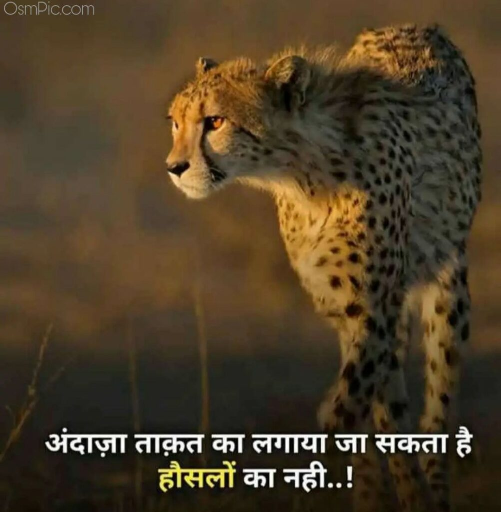 Tiger Attitude status image in hindi