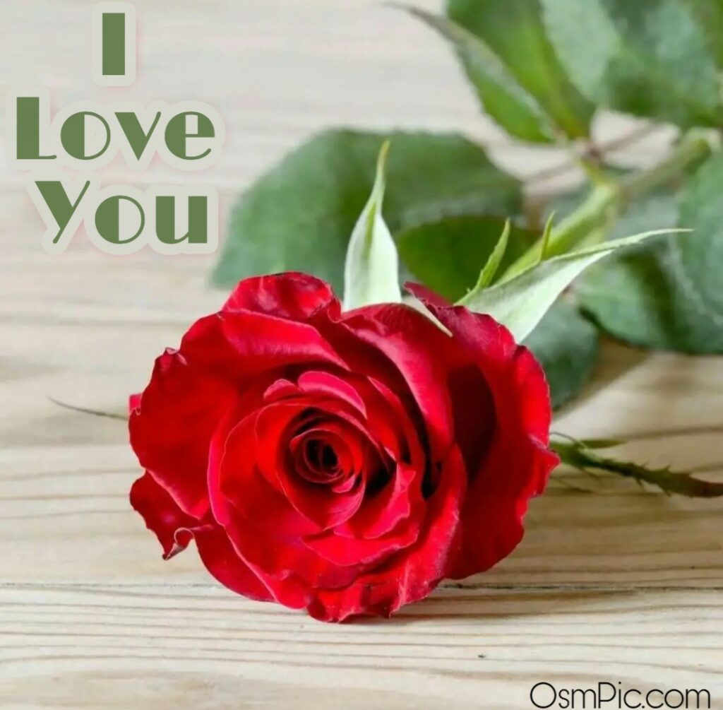 Simple I love you image with rose