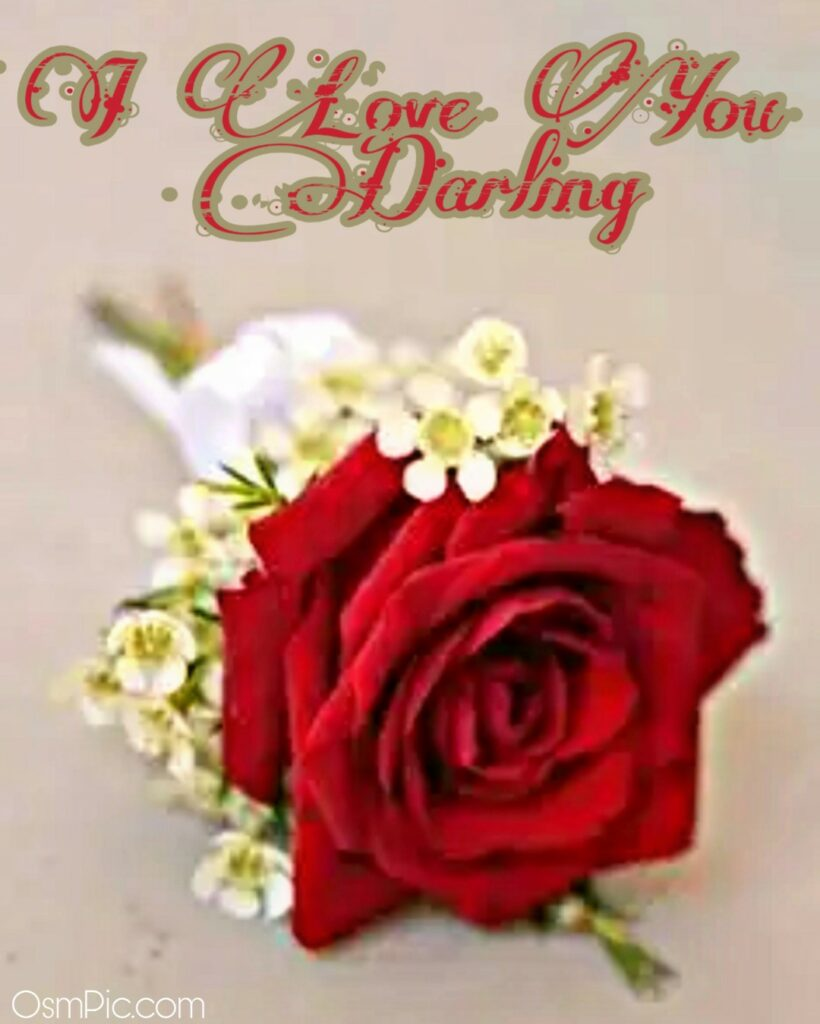 Red rose with I love you darling