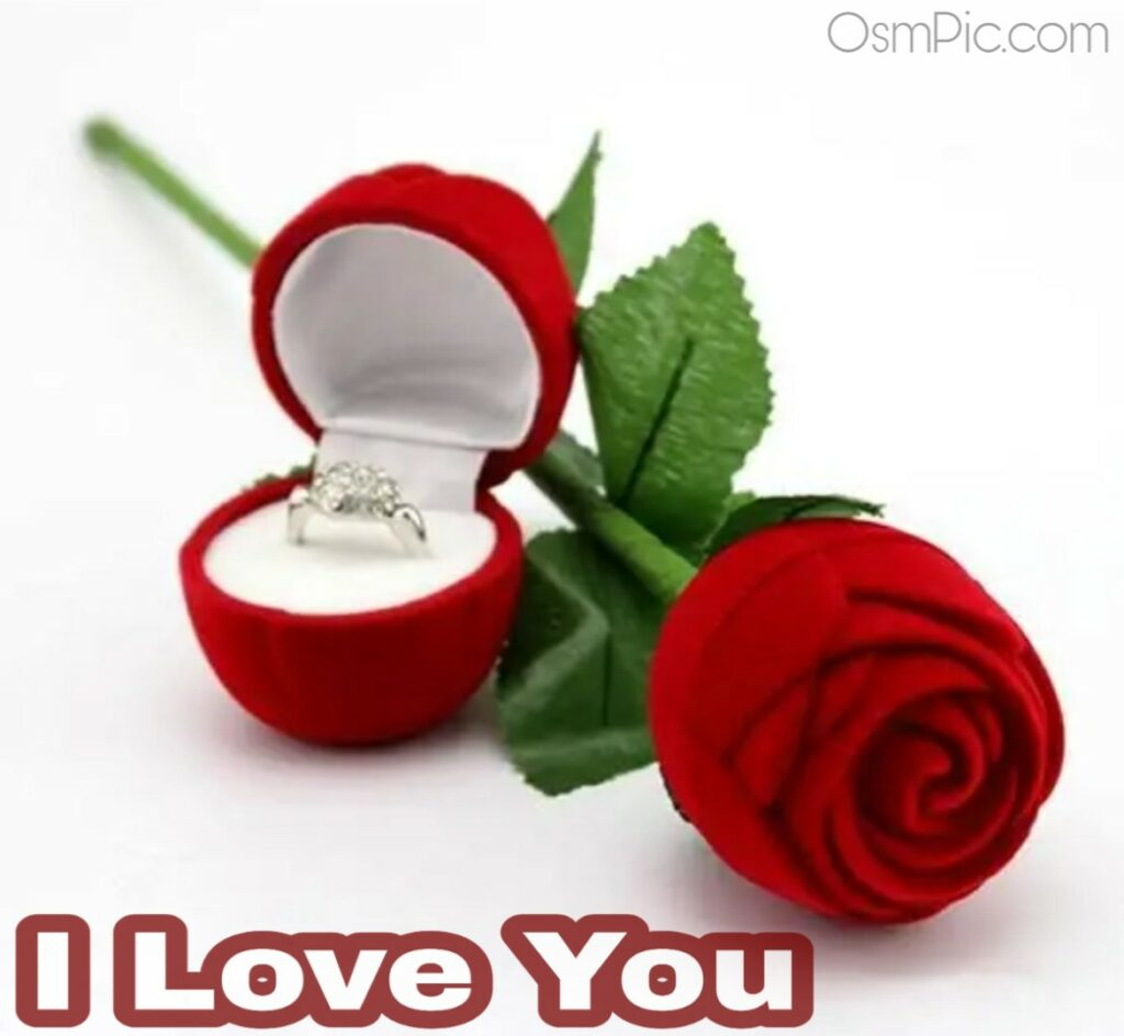Romantic lovely I love you image with rose for rese day to propose girl boy