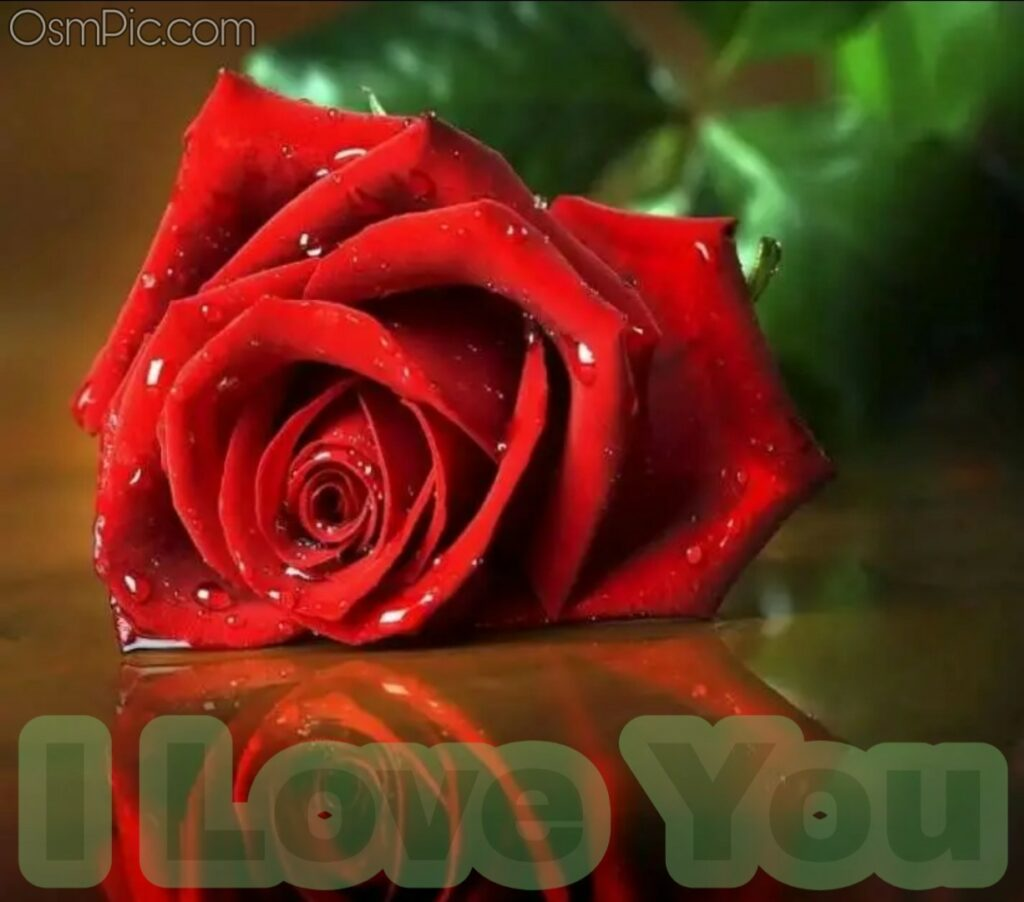 Romantic rose with I love you