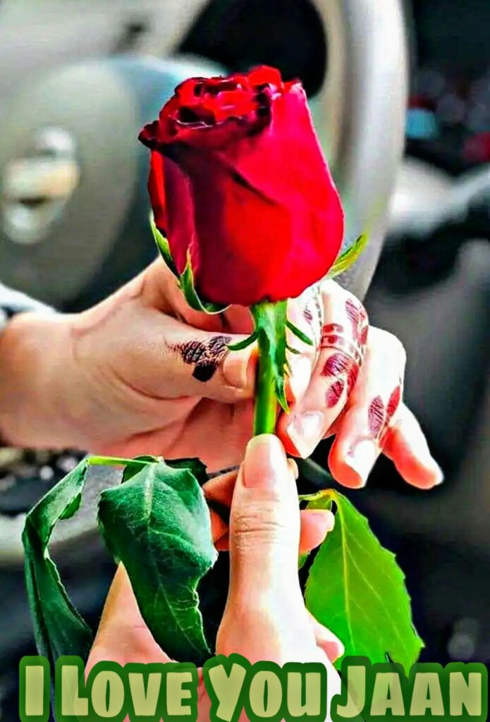 A Romantic Red Rose With I Love You Message