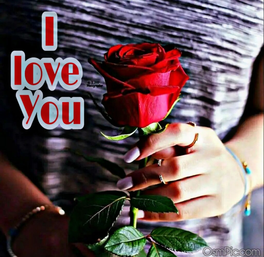 Red rose with I love you for girlfriend