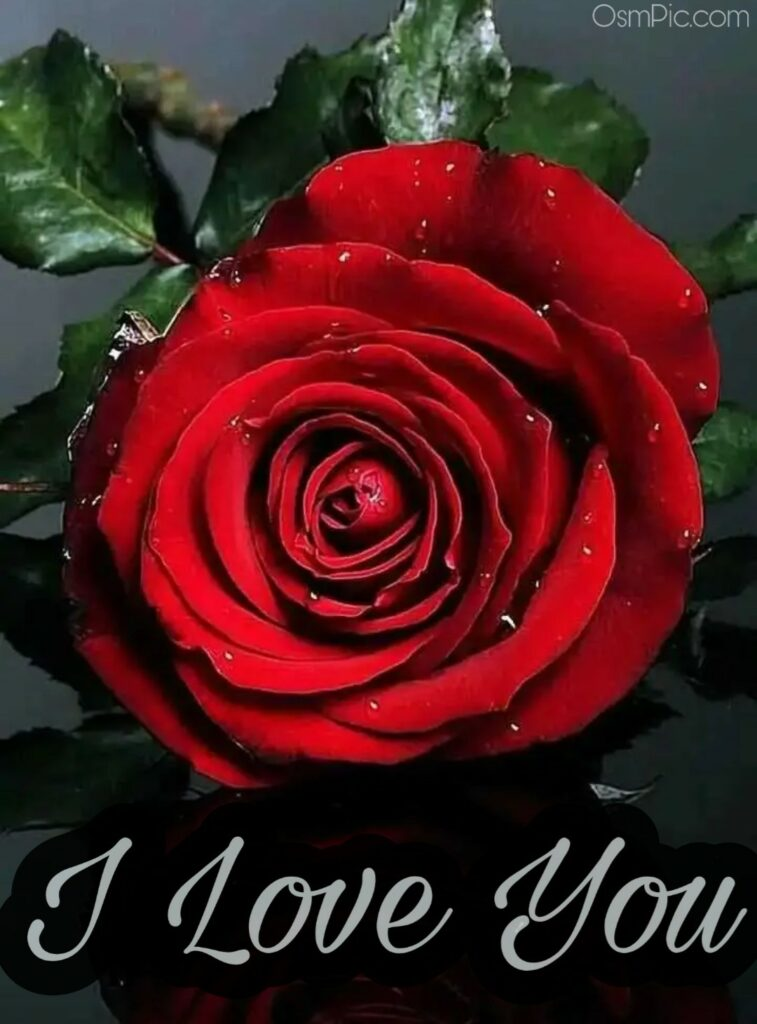 Best I love you red rose pic