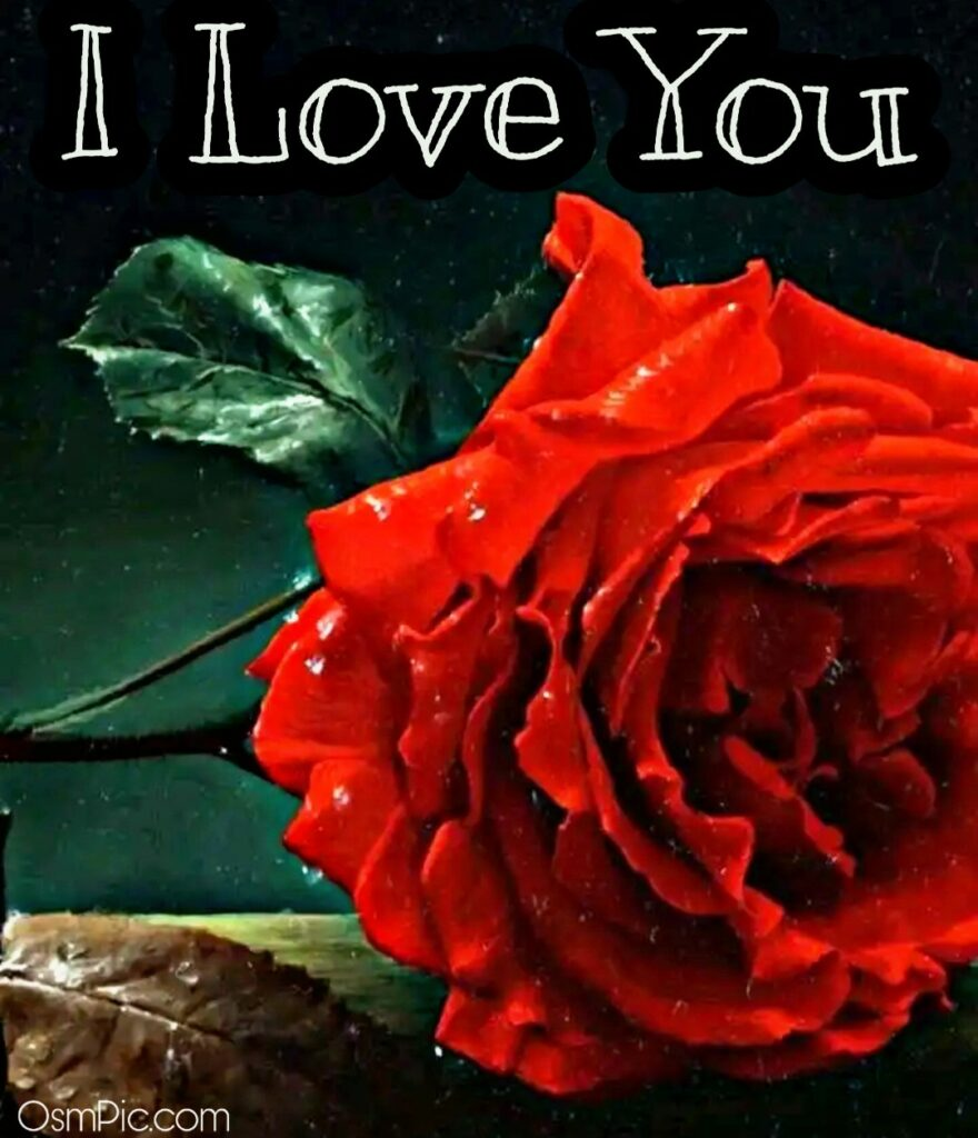 HD I Love You Image With Rose