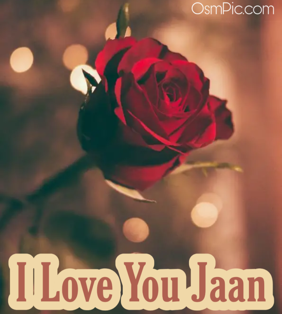 I love you jaan red rose ?