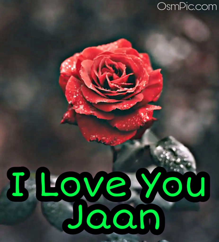 Romantic rose with I love you jaan message