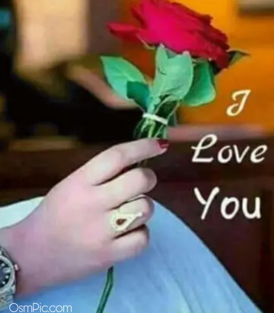 Red rose i love you pic