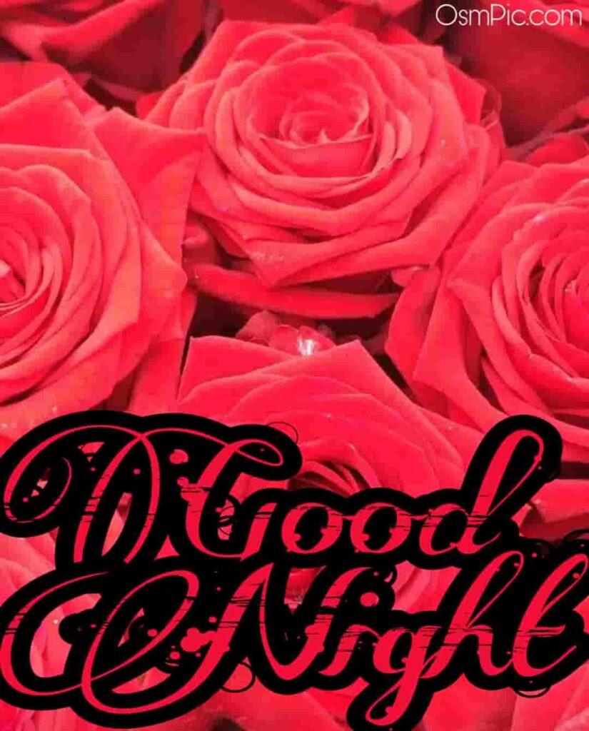 good night rose flowers