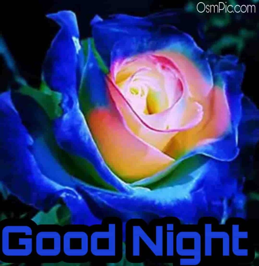 good night blue rose