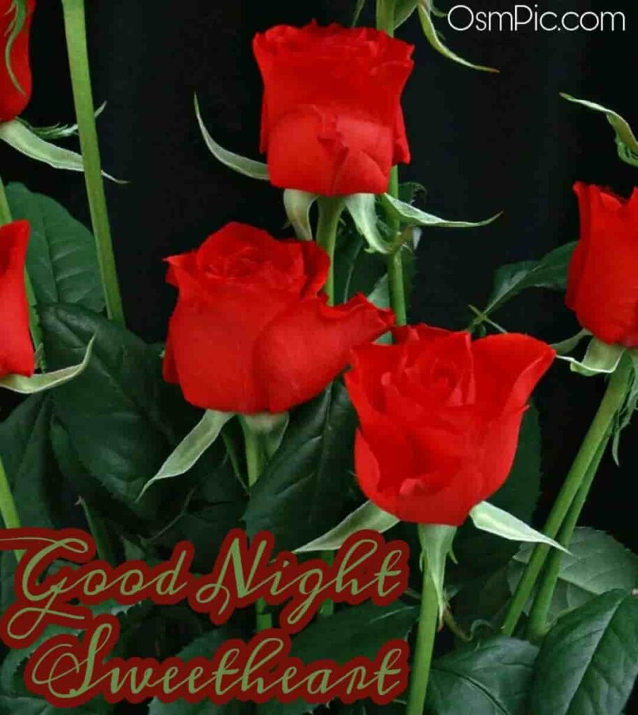 3 beautiful red roses of good night
